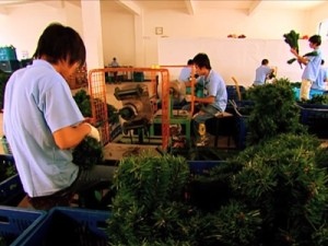 Christmas Tree Factory