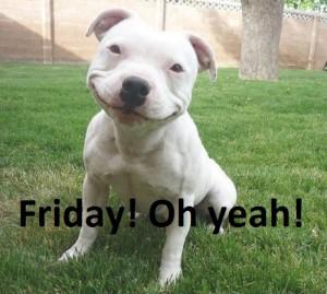 Friday-dog 01
